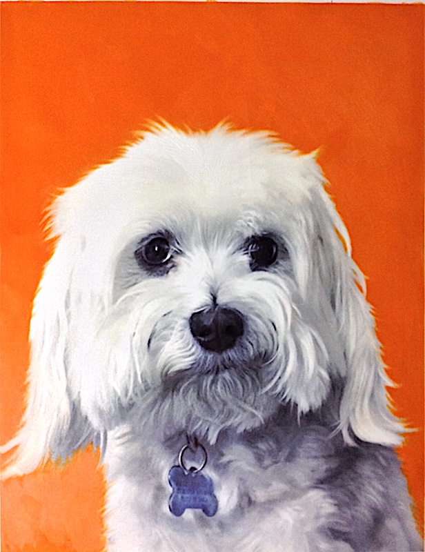 Dog Portrait with Orange Background by Splendid Beast
