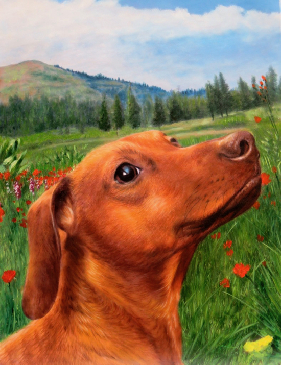 Dog in field portrait by Splendid Beast