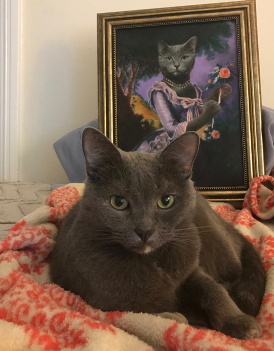 Cat sitting by its oil portrait as a lady