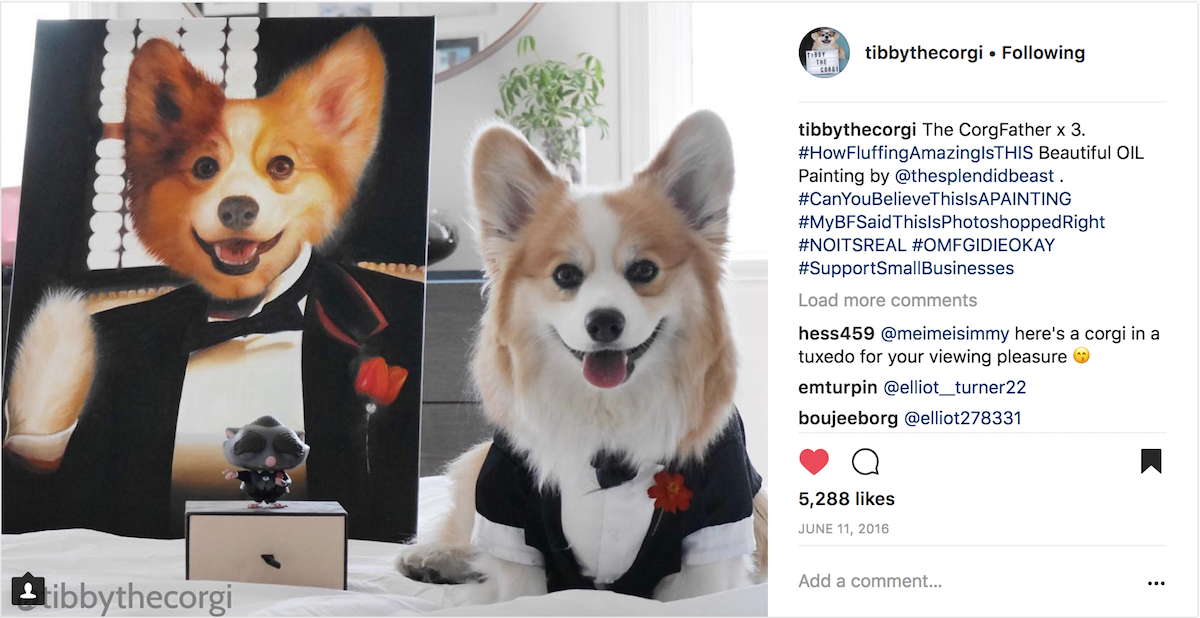 Tuxedo Dog Painting of Tibby the Corgi from Instagram